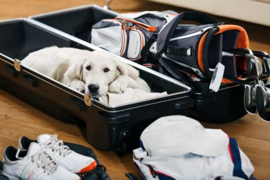 best golf travel bags and hard cases
